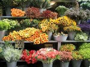 Розничная бизнес продажа и план салона по выращиванию цветов