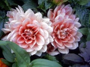 Заказ цветов: недорого, с доставкой на дом или по городу
